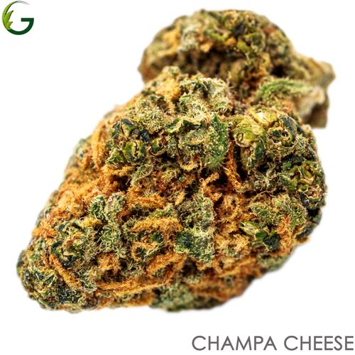 Champa Cheese (H) 3.5g