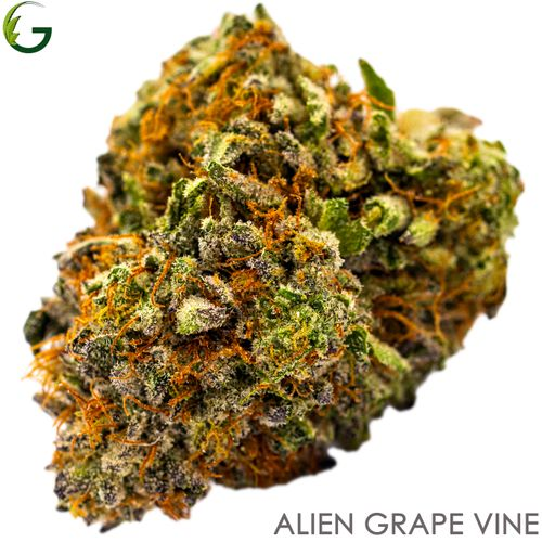 Alien Grape Vine (I/H) 3.5g