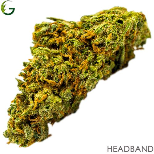 Headband (H) 1g (Medical Only)