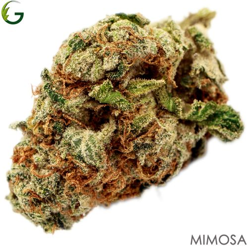 Mimosa (S/H) 14g
