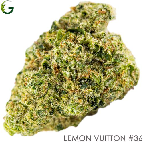 Lemon Vuitton #36 (H) 3.5g