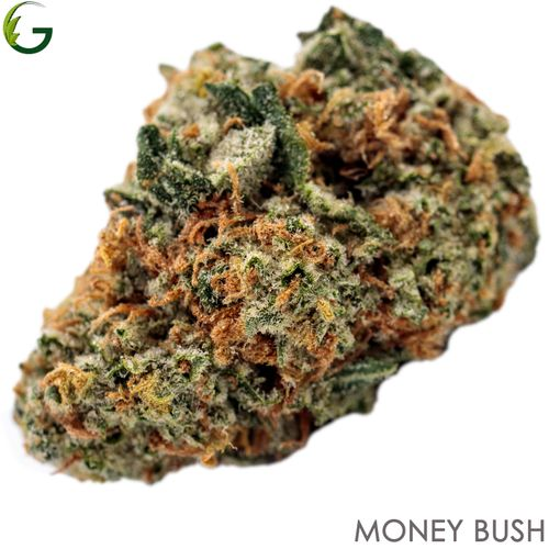 Money Bush (I) 1g