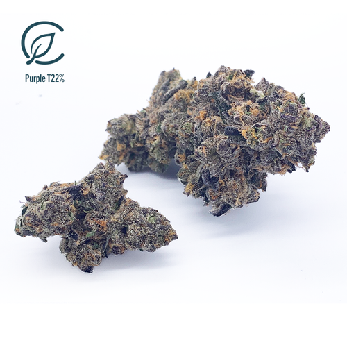 Purple T22% FL 11625 Flower - 3.5g (Curaleaf)