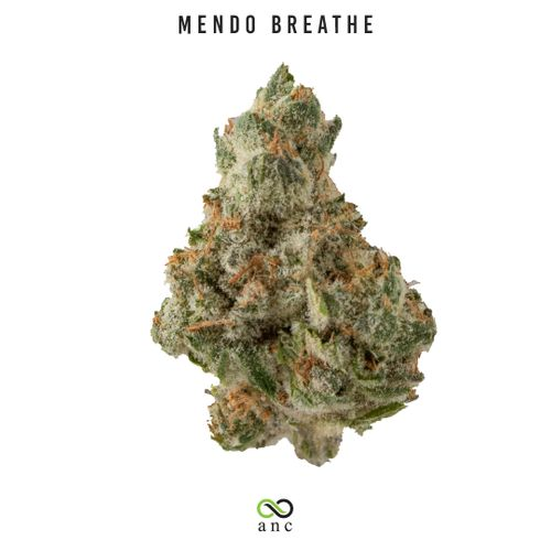 Mendo Breathe (I) | Premium Shelf