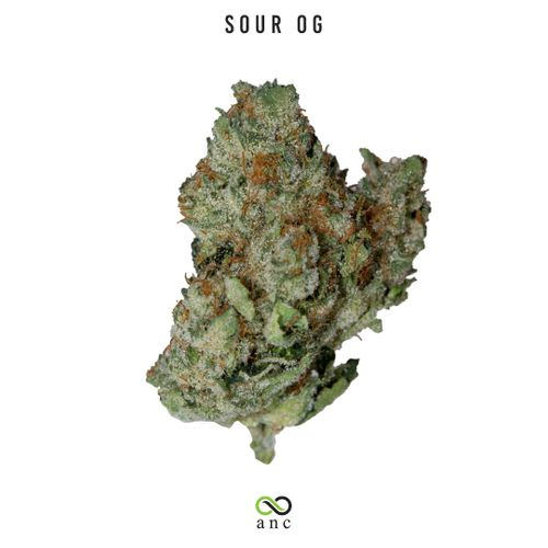Sour OG (S) | Top Shelf