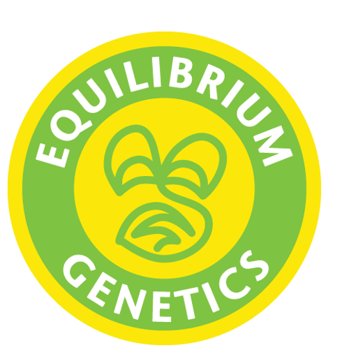 Equilibrium Genetics Seeds-Ice Over 12ct