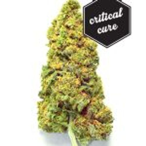 Critical Cure (CBD) - 1/8